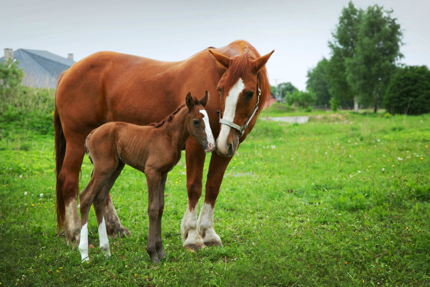 beautiful horses on the field
