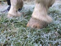 winter hoof care