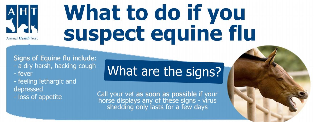Equine Flu Poster