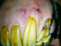 EOTRH equine teeth
