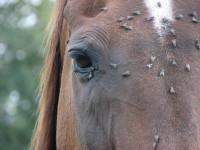 Horse_needs_mask