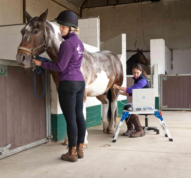Ridings.Equine-066