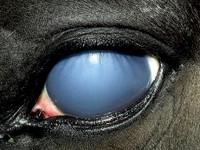 Equine-Vision-Part-3-copy