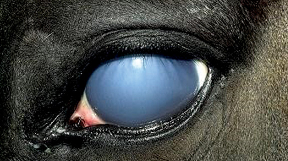 Equine-Vision-Part-3-copy